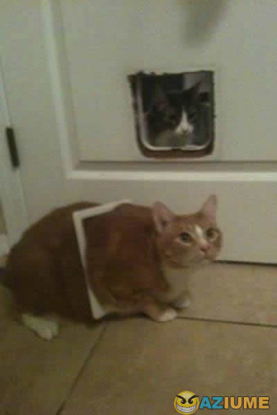 Aquele amigo gordo