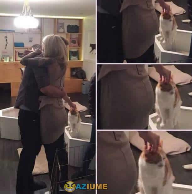 Quando você ama gatos
