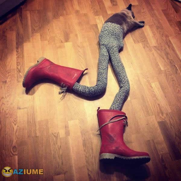 Zueira sem limite com o gato