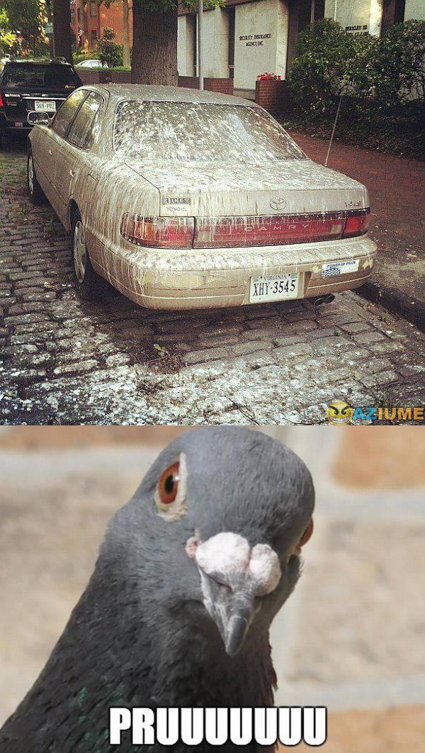 Quando um pombo resolve fazer uma vingança