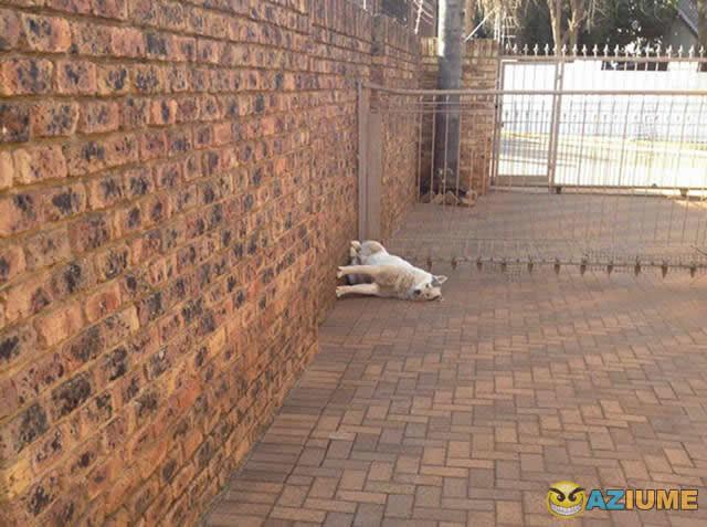 Esse cachorro tem problemas