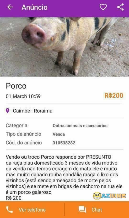 Vende se um porco