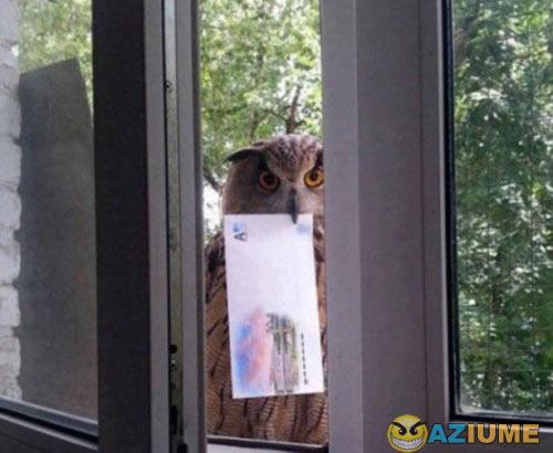 Finalmente, a carta de Hogwarts!