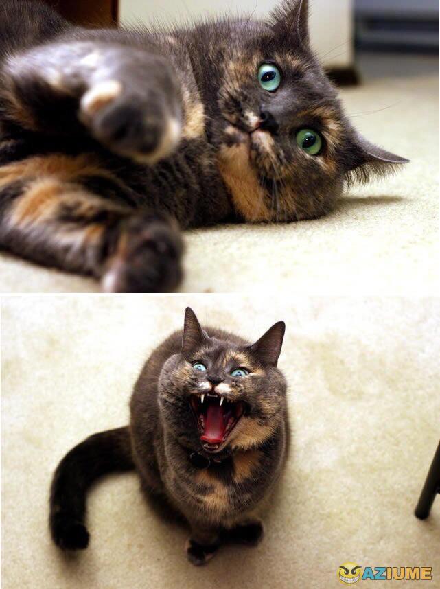 Vai entender esse gato da vida