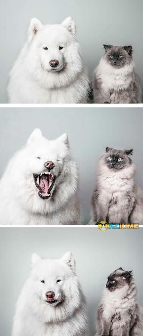 A cara dos meus amigos quando eu do risada