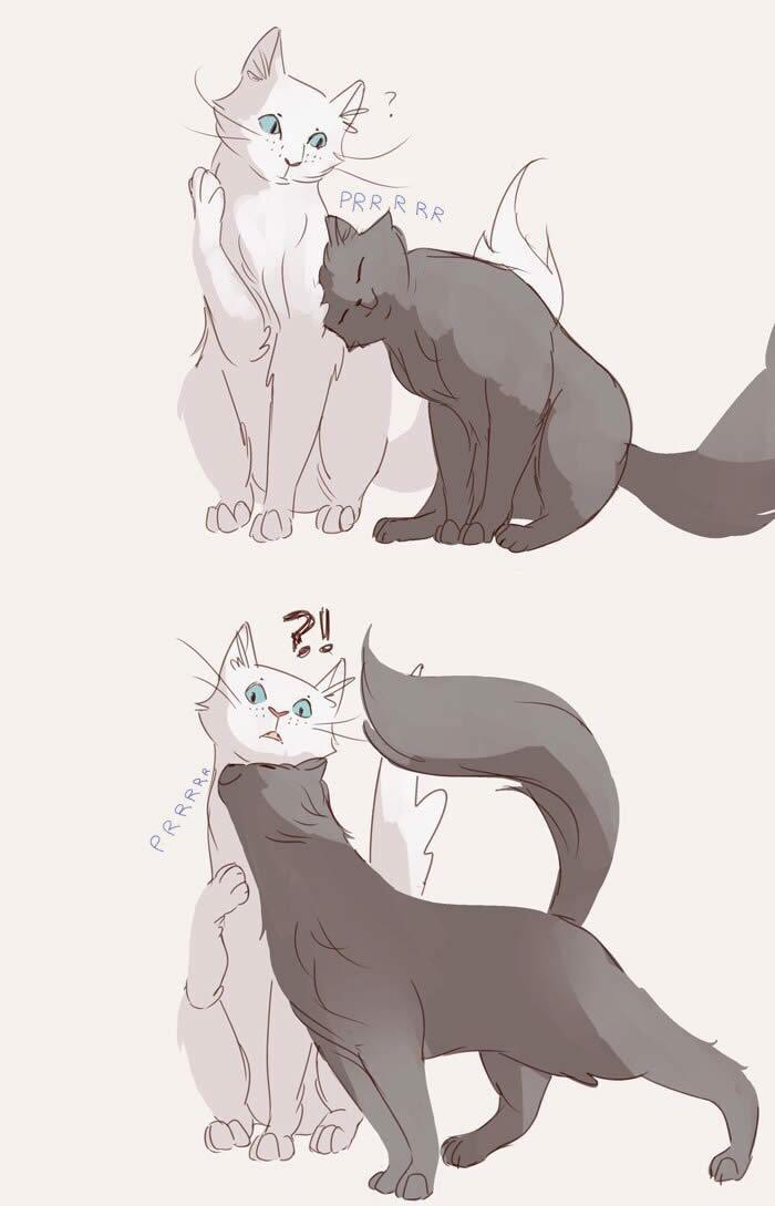 Como conquistar uma gata