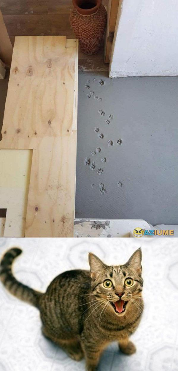 Um gato troll