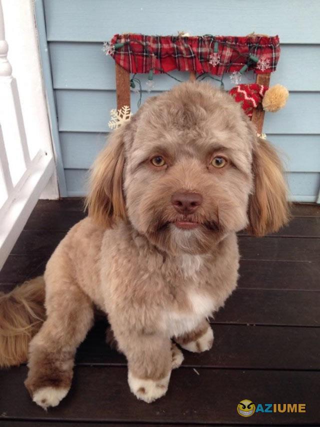 Cachorro com feição humana