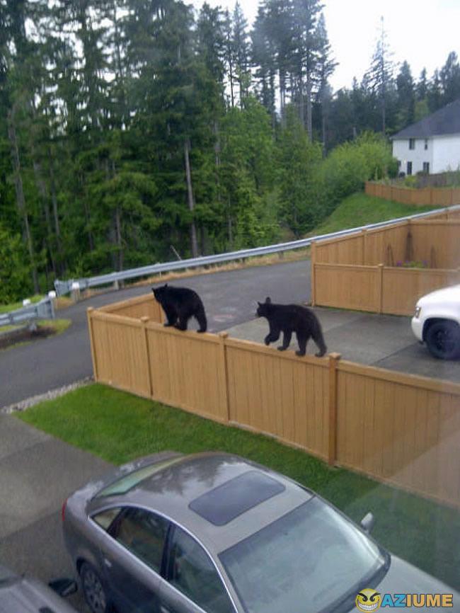 Os gatos do vizinho são realmente diferentes
