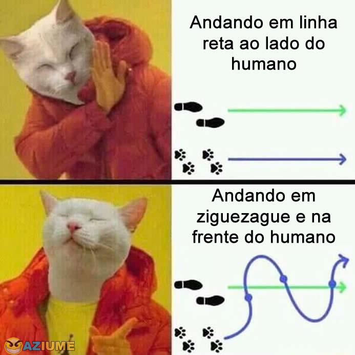 O que os gatos gostam