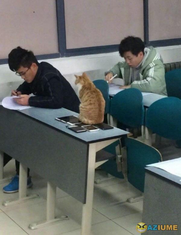 Aquele professor gato