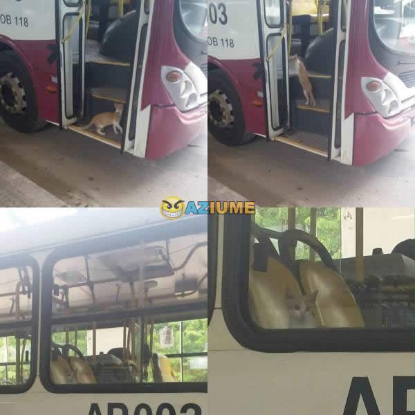 Pelo preço da gasolina melhor ir de ônibus