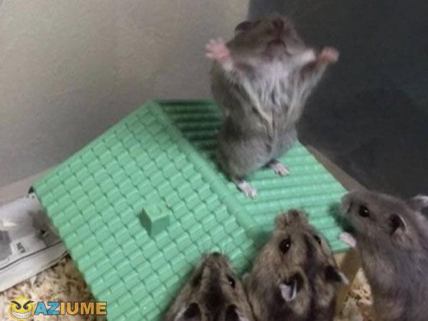 Culto do hamster