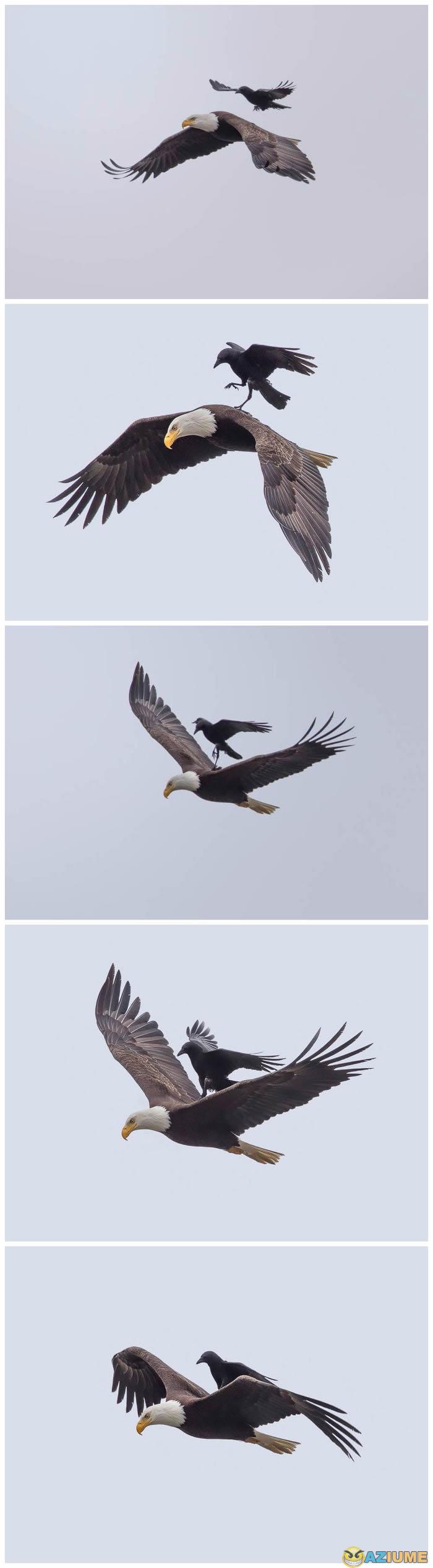 Primeiro Uber águia