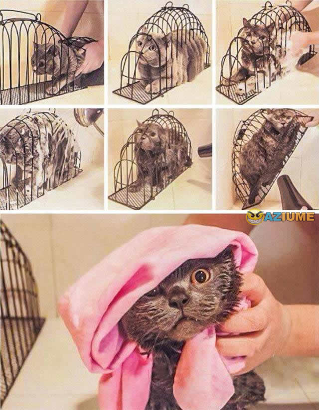 Gaiola de tortura para gato
