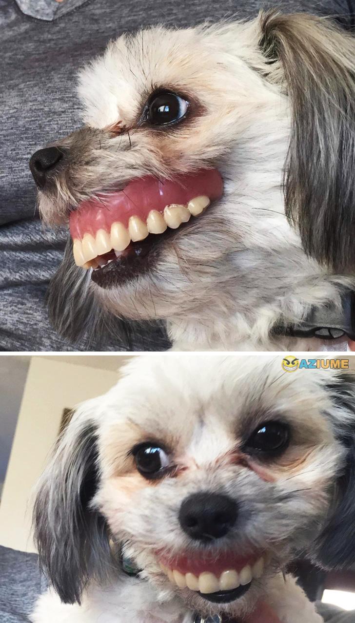 Cachorro mais feliz do mundo