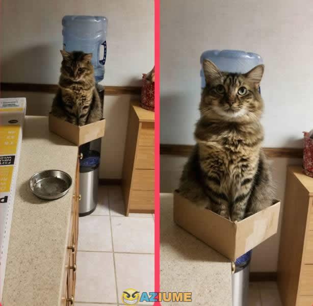 Quando o gato tem sorte