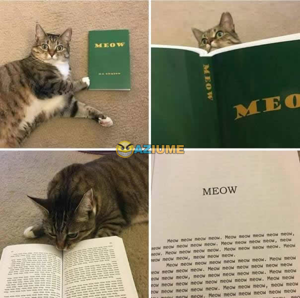 Primeiro livro para gato