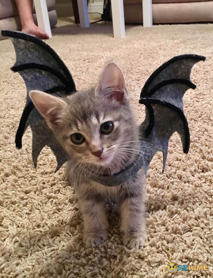 Dorgas larguei, agora sou um morcego!
