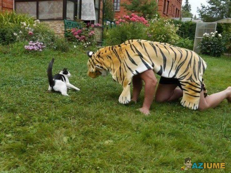 Dica de como assustar seu gato