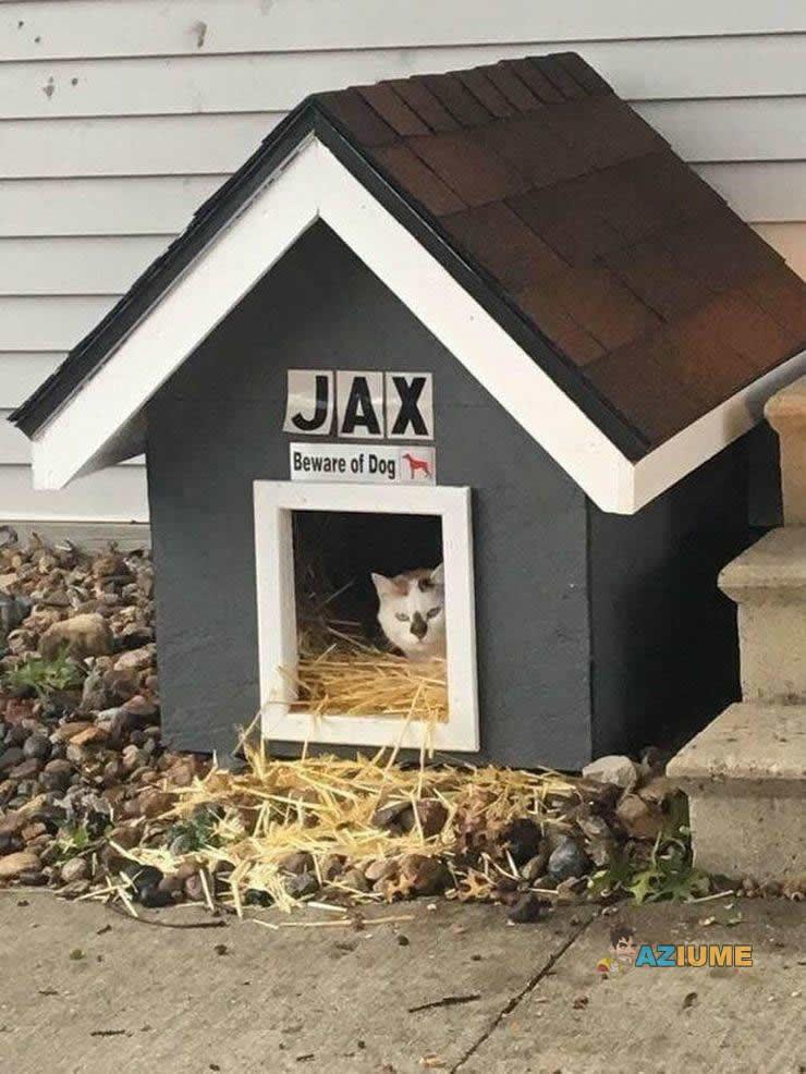 Jax o cachorro bravo