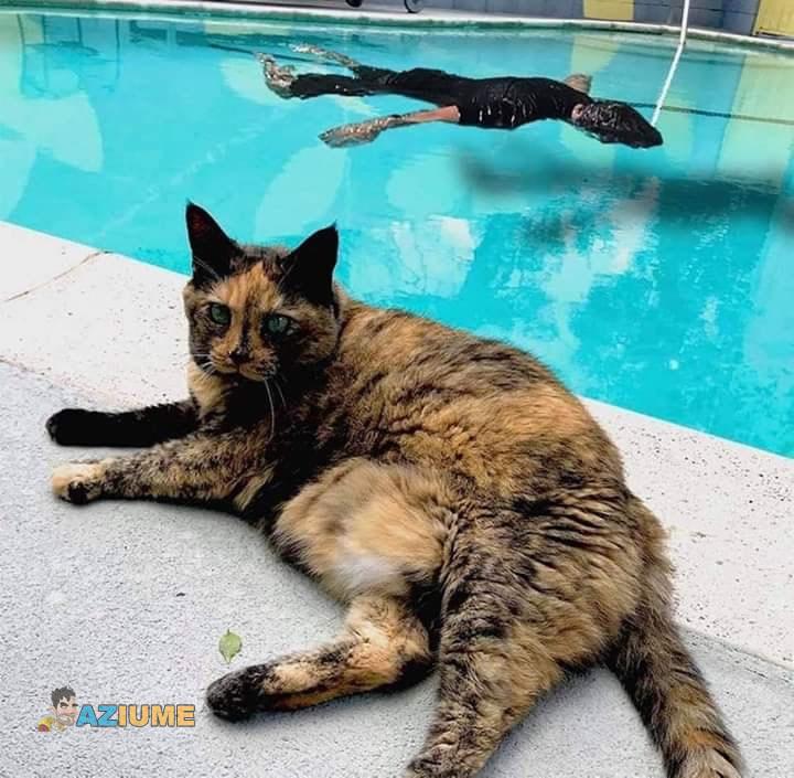 Vejam a reação desse gato ao ver seu dono se afogando