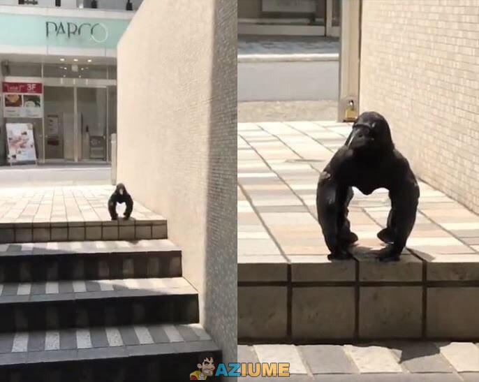 Um corvo muito estranho