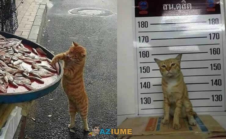 Ladrão de peixe é preso