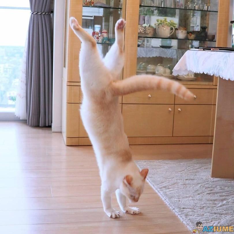Gato dançando break