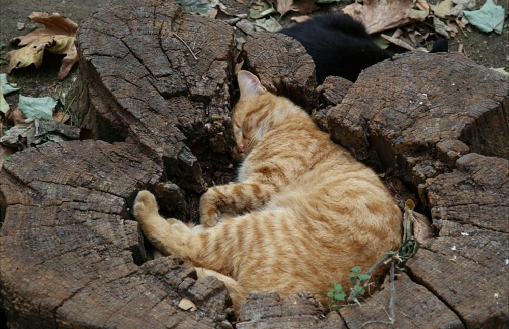 Todos os gato adora preencher a lacuna