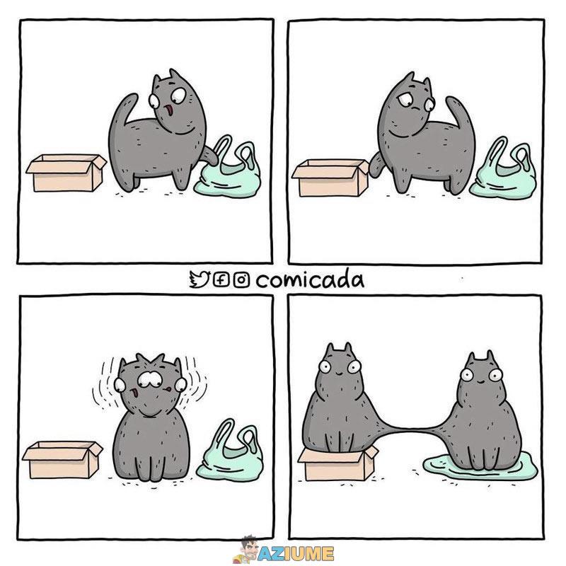 Quando o gato precisa fazer uma escolha