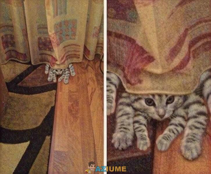 Gatos nascem para trollar seres humanos