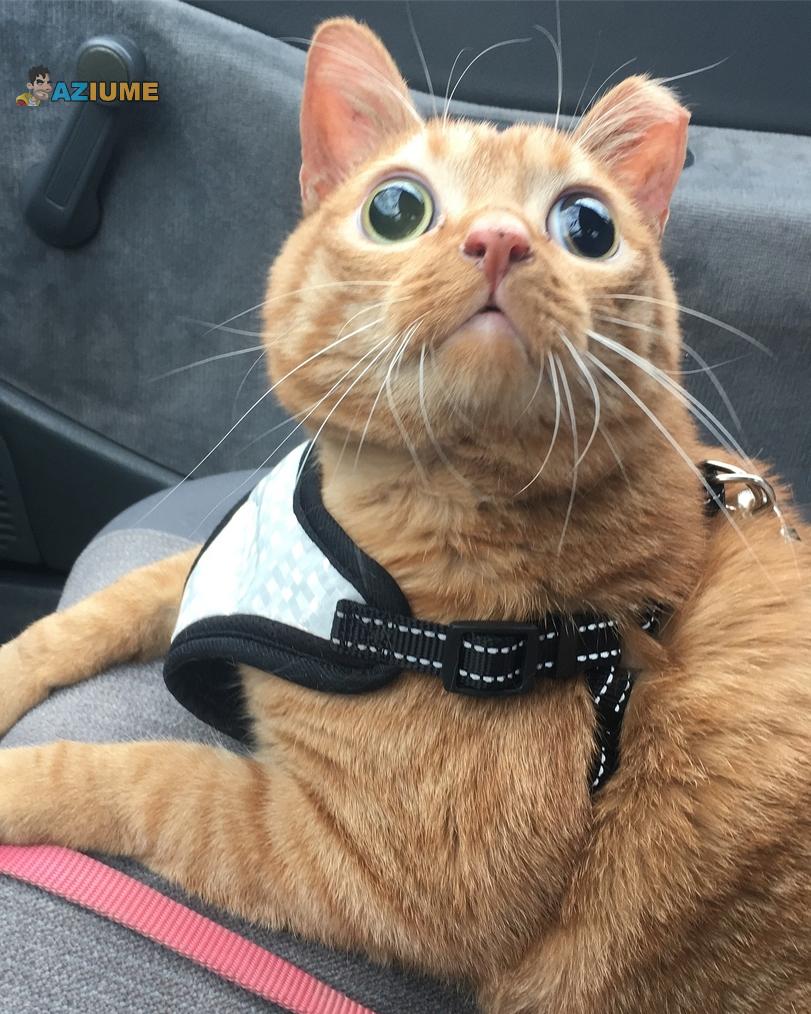 Meu gato tem um olhar estranho