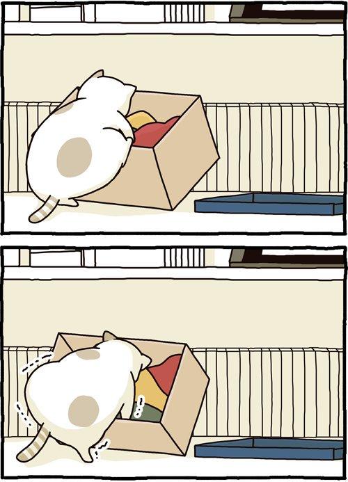 Gatos e suas manias estranhas