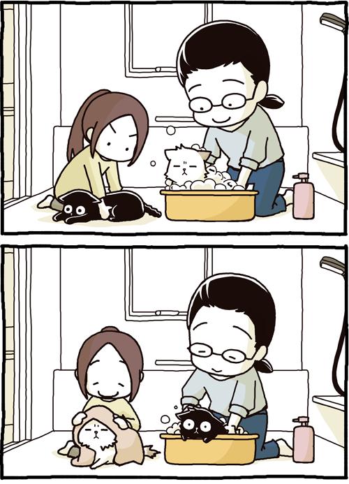 Tanto banho no gato