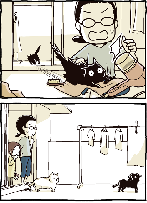 Dando banho no gato