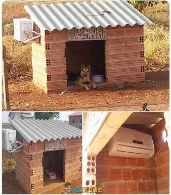 Agora sim a casa do cachorro está perfeita