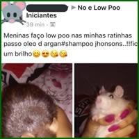 Como fazer o pelo da sua rata brilhar