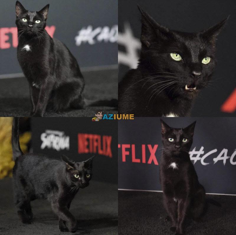 Esse é o gato Salem