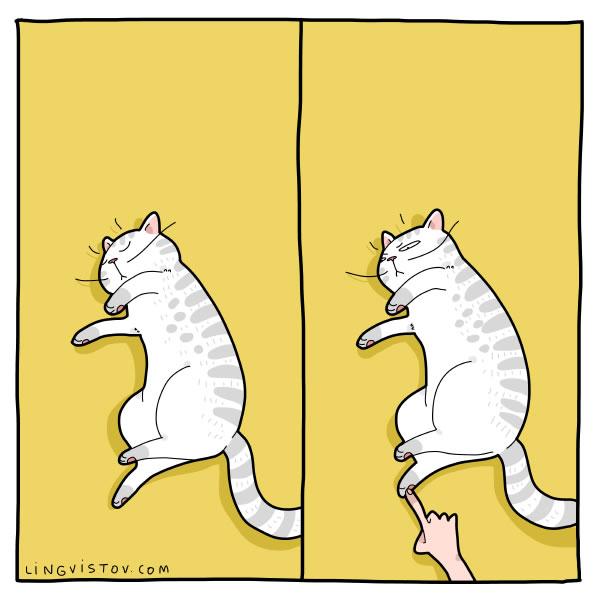Para quem tem gato em casa vai entender