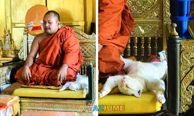 Gato budista