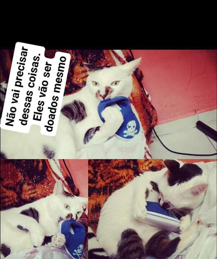 Quando meu gato descobriu minha gravidez