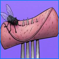 4 coisas que acontece quando uma mosca pousa na sua comida