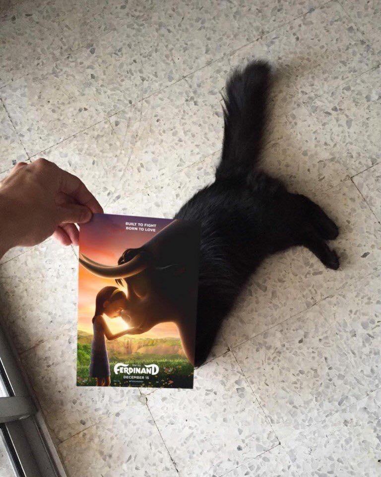 Gatos e filmes são a combinação perfeita