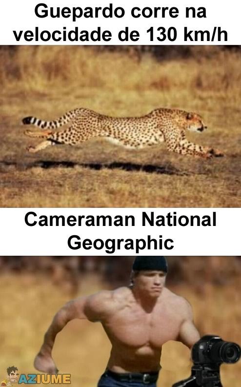 Guepardo corre na velocidade de 130 km/h