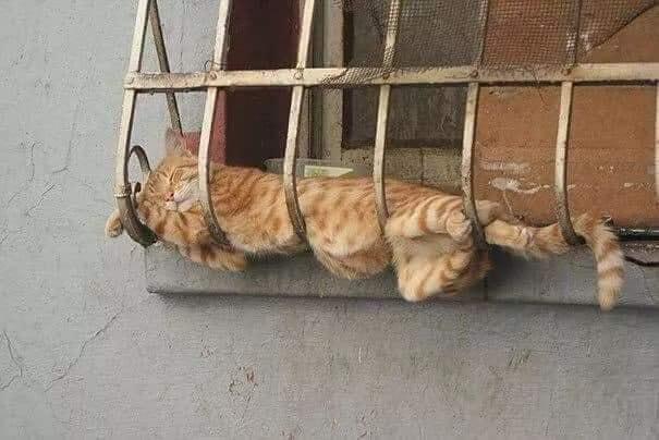 A regra é clara! Se dá pra dormir é cama!