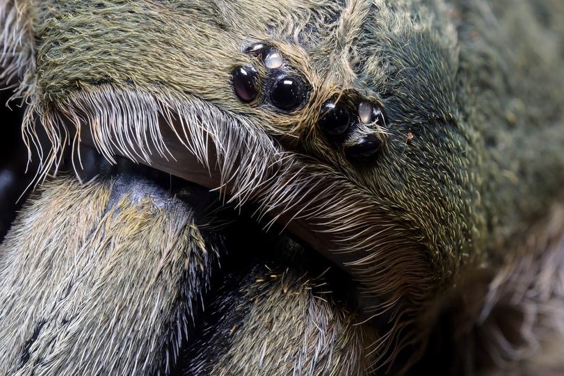 Como as aranhas são seres lindos