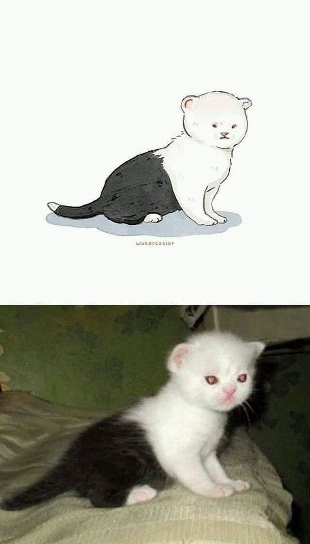 Gato e toda sua estranheza