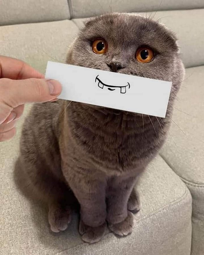Perturbando o gato para passar o tempo