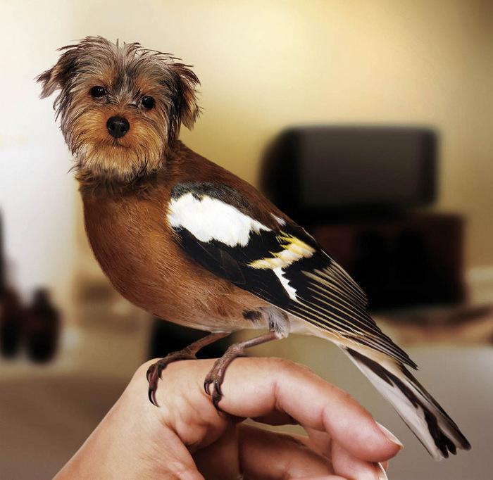 A esquisita fusão entre cães e pássaros